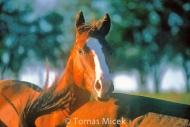 HORSES_2_180