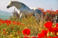 HORSES_2_181