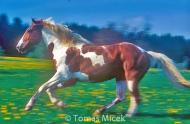 HORSES_2_183