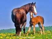 HORSES_2_184
