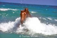HORSES_2_185