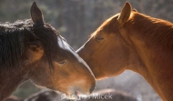 HORSES_2_186