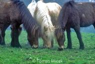 HORSES_2_187