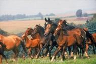 HORSES_2_188