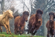 HORSES_2_189