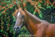 HORSES_2_190
