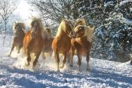 HORSES_2_193