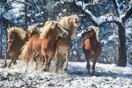 HORSES_2_194
