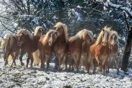HORSES_2_195
