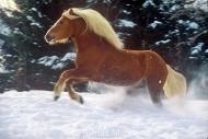 HORSES_2_196