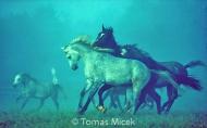 HORSES_2_197