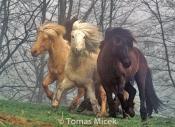 HORSES_2_199