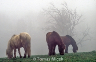 HORSES_2_200