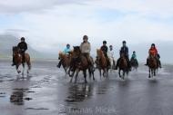 Iceland_Horses_002