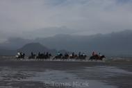Iceland_Horses_003