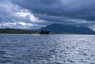 Iceland_Horses_004