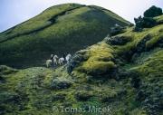 Iceland_Horses_006