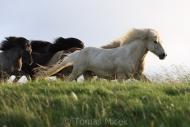 Iceland_Horses_010