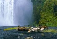 Iceland_Horses_016