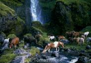 Iceland_Horses_022