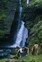 Iceland_Horses_023