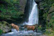 Iceland_Horses_024
