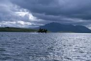 Iceland_Horses_034