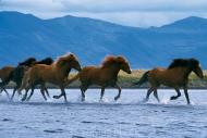 Iceland_Horses_035