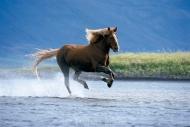 Iceland_Horses_036