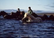 Iceland_Horses_039