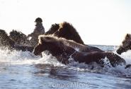 Iceland_Horses_040