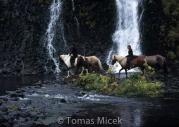 Iceland_Horses_041