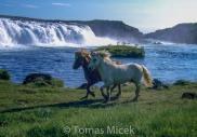 Iceland_Horses_042