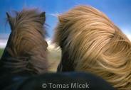 Iceland_Horses_046