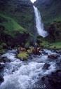 Iceland_Horses_053