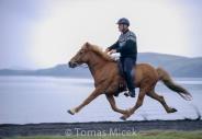 Iceland_Horses_060