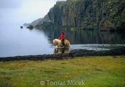 Iceland_Horses_062