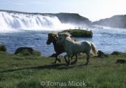 Iceland_Horses_065