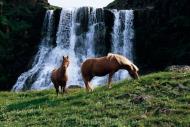 Iceland_Horses_067