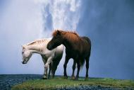 Iceland_Horses_071