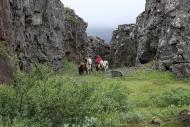 Iceland_Horses_080