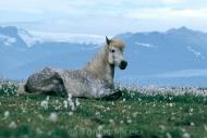 Iceland_Horses_090