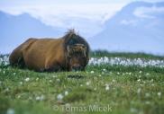 Iceland_Horses_094