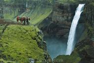 Iceland_Horses_098