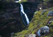 Iceland_Horses_099