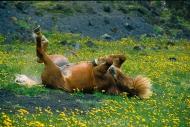 Iceland_Horses_120