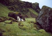 Iceland_Horses_135