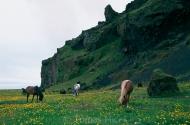 Iceland_Horses_139