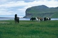 Iceland_Horses_141