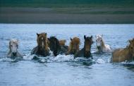 Iceland_Horses_153